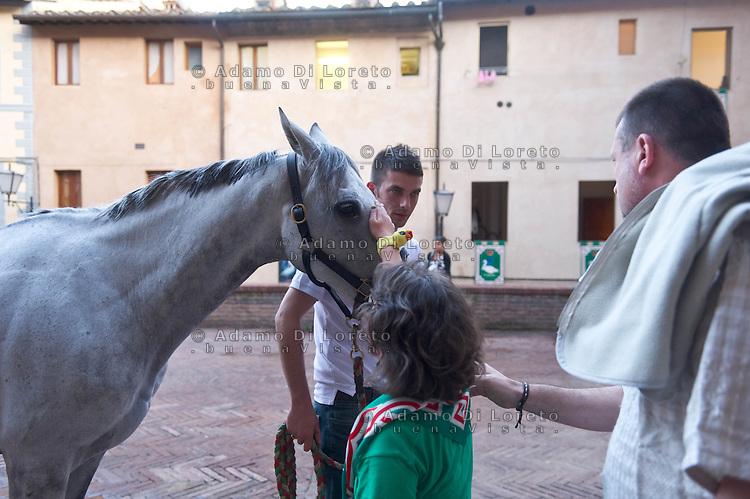 """Siena 02/07/2013: Palio di Siena. Il palio del mese di Luglio è dedicato alla festa di Santa Maria di Provenzano. In ogni Palio prendono parte massimo 10 delle 17 contrade presenti nella città. La scelta viene estratta a sorte. La contrada dell'Oca si è aggiudicato il Palio con il cavallo """"Guess"""" guidato dal fantino Giovanni Atzeni conosciuto come """"Tittia"""". Nella foto nell'oratorio di Santa Caterina, il cavallo della contrada dell'Oca, il vincitore del Palio, viene accudito e accarezzato da tutti i bambini. Foto Adamo Di Loreto/BuenaVista*photo"""