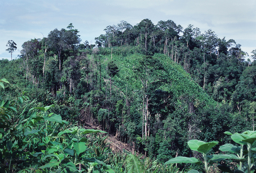 Natural threats asian rainforests