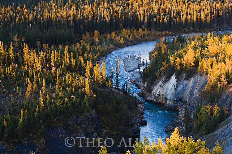 Lapie River winding through forest in fall, aspen trees with yellow leaves, Yukon, Canada