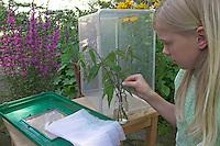 Kinder züchten Schmetterlings-Raupen, Terrarium wird mit einem Strauß frischer Brennnesseln als Raupenfutterpflanze bestückt