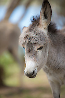 Newborn Donkey<br />