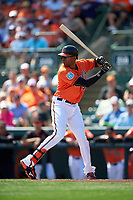 Baltimore Orioles right fielder Henry Urrutia (51) at bat during a Spring Training game against the Minnesota Twins on March 7, 2016 at Ed Smith Stadium in Sarasota, Florida.  Minnesota defeated Baltimore 3-0.  (Mike Janes/Four Seam Images)
