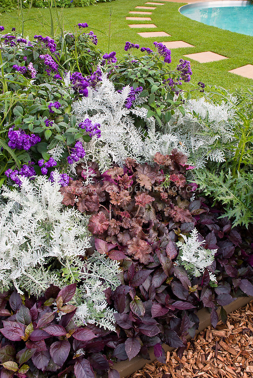 Attirant Purple Foliage Garden: Heuchera, Fragrant Plant Flowers Of Heliotrope, Dark  Purple Plantings With