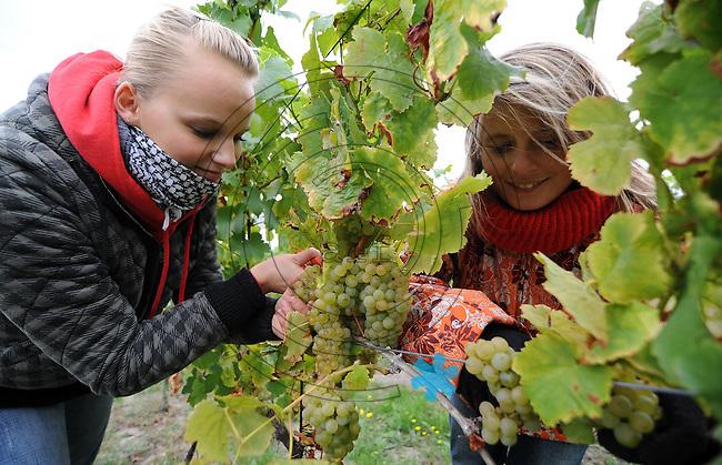 Weinlese 2009 im Bild: Lisa Graebner und Susan Bergert helfen bei der Weinlese. Foto: Alexander Bley