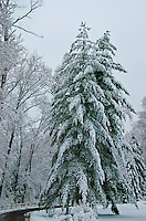 Winter Snow Storm In Centerville, Ohio 2013