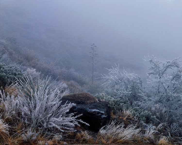 Hoarfrost and fog in Chisos Basin in the Chisos Mountains; Big Bend National Park, TX