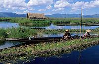 Asie/Birmanie/Myanmar/Plateau Shan/Ywathit: Lac Inle - Les jardins flottants