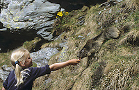 Kind, Mädchen füttert Alpen-Murmeltier aus der Hand, Alpenmurmeltier, Murmeltier, Marmota marmota, alpine marmot