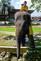 Indonesia, Sumatra. Medan. The old Medan Zoo, now moved to e new location. Riding on an elephant.