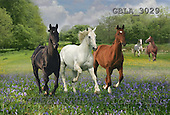 Bob, ANIMALS, horses, photos, GBLA3029,#a# Pferde, caballos