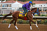 DEL MAR, CA - OCTOBER 02: Gunnevera, owned by Margoth and trained by Antonio Sano, exercises in preparation for Breeders' Cup Classic at Del Mar Thoroughbred Club on November 2, 2017 in Del Mar, California. (Photo by Anna Purdy/Eclipse Sportswire/Breeders Cup)