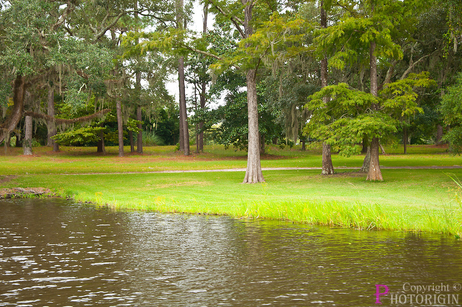 Fantastic view of lake side in lowcountry gardens in Brookgreen. An amazing garden you can find in the coastal ares near Mrytle beach.