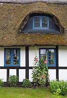 Denmark, Jutland, Boes near Skanderborg: Traditional half timbered thatched cottage with Hollyhocks | Daenemark, Juetland, Boes bei Skanderborg: traditionelles Reet gedecktes Haus mit Ochsenauge