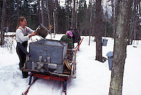 sleigh, Vermont, VT, Man pours sap into container on sleigh while collecting sap during sugaringtime on Carpenter Farm in Cabot in the snow in the early spring.