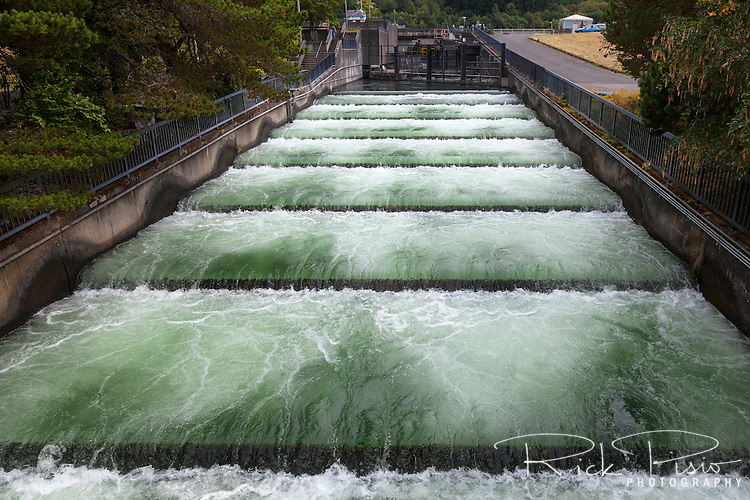 Fish ladders at Bonneville Dam along the Columbia River in Oregon