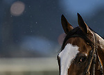 September 3, 2020:  Tiz the Law at Churchill Downs in Louisville, Kentucky. The race is being run without fans due to the coronavirus pandemic that has gripped the world and nation for much of the year. Evers/Eclipse Sportswire/CSM