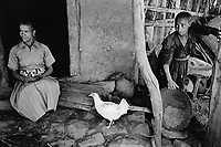 Ethiopia. West Gujam. Danbecha district. Anjeni is a small village. A woman seats at the entrance of her small house whose walls are made of mud. Her daughter is sorting the teff grains. Teff is a local cereal which is used to make injera, a kind of bread that ethiopians eat every day. A white hen pecks some grains on the ground. 10.05.96 © 1996 Didier Ruef