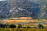 Vineyard near Aniane Languedoc. France. Europe.