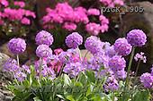 Gisela, FLOWERS, BLUMEN, FLORES, photos+++++,DTGK1905,#f#