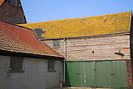 Orange lichen on barn roof, Suffolk farming landscape scenery, East Anglia, England