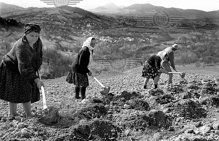 Women work in the fields, Maramures.