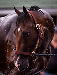 LOUISVILLE, KENTUCKY - MAY 01: Omaha Beach gets a bath after completing preparations for the Kentucky Derby at Churchill Downs in Louisville, Kentucky on May 01, 2019. Evers/Eclipse Sportswire/CSM