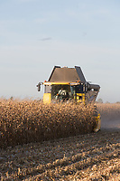 Harvesting maize for feed with a corn header on a New Holland combine<br /> Picture Tim Scrivener 07850 303986<br /> &hellip;.covering agriculture in the UK&hellip;.