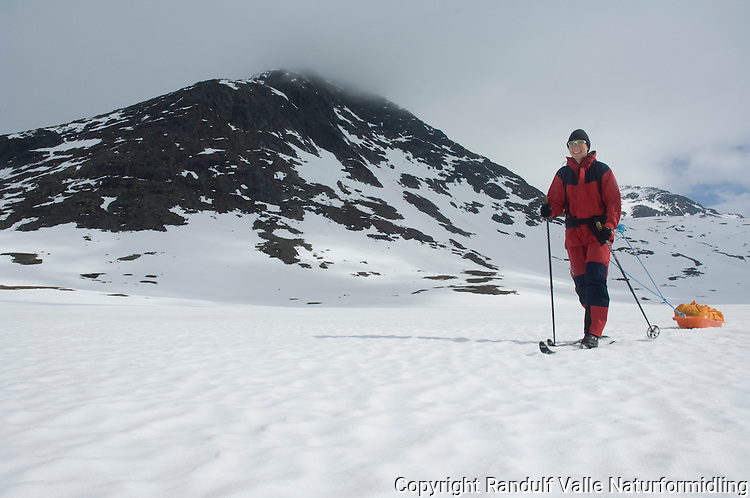 Jente trekker pulk i Børgefjell ---- Girl pulling sled in Børgefjell