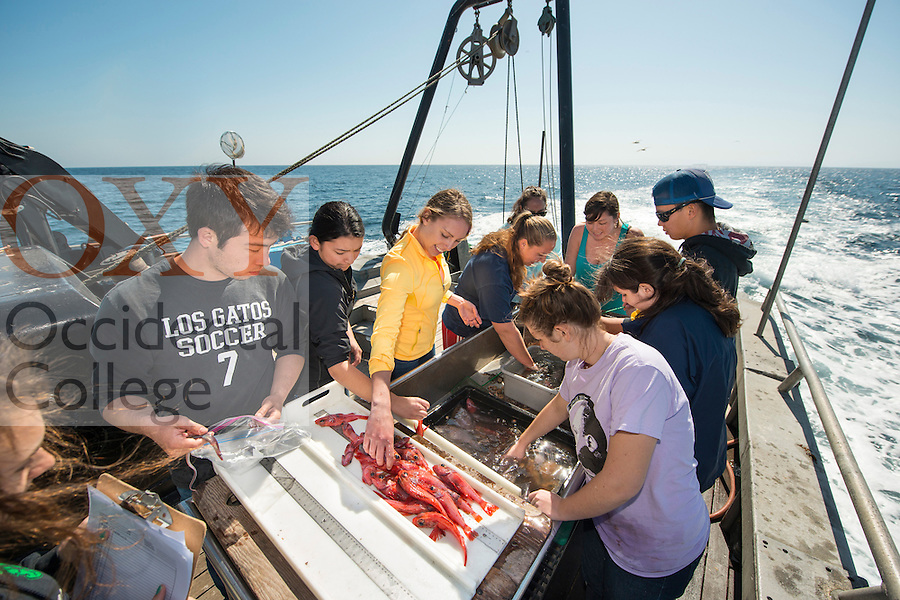 Occidental College students examine sea life as part of a class on marine biology on February 26, 2013. The class, taught by Professor Dan Pondella, takes frequent field trips along the California coast, near Los Angeles. (Photo by Marc Campos, Occidental College Staff Photographer)<br />