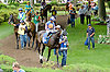 Wait Till Dawn before The Go For Wand Stakes at Delaware Park on 6/11/12