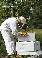 1B15-501z  Worker Caring for Honeybee Hive