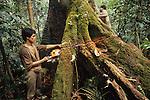 Tree Cutting Logging Sarawak