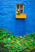 County Cork, Ireland: Blue wall accented with yellow window and planter box and flowering nasturtiums in the village of Kinsale
