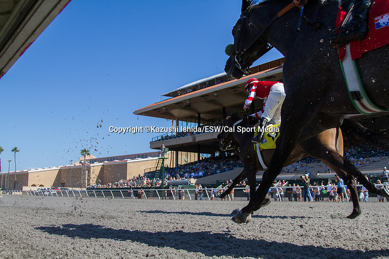 AUG 15,2014:Kickback of horses on the polytrack at Del Mar in Del Mar,CA. Kazushi Ishida/ESW/CSM