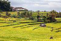 Jatiluwih, Bali, Indonesia.  Terraced Rice Fields.