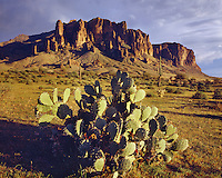 Evening light on Pricklypear and Saguaro cacti in the Supertstition Mountains; Tonto National Forest, AZ
