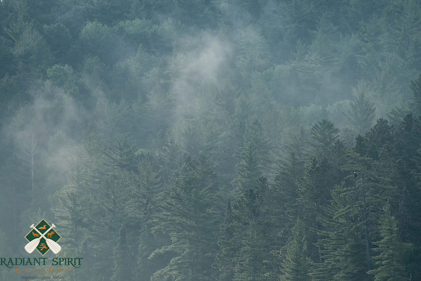 &quot;Morning Mist and Eagle&quot;<br />  <br /> A bald eagle surveys the misty forest from a perch high in the trees.<br />  ~ Day 96 of Inspired by Wilderness: A Four Season Solo Canoe Journey