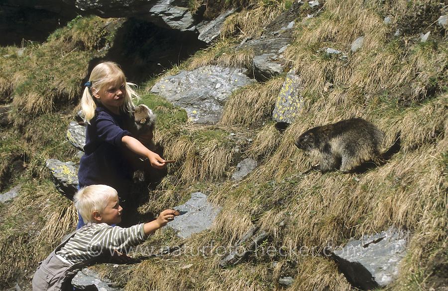 Kinder füttern Alpen-Murmeltier aus der Hand, Alpenmurmeltier, Murmeltier, Marmota marmota, alpine marmot