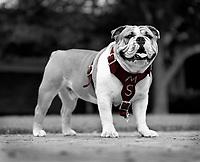 Bully TaTonka portrait outside