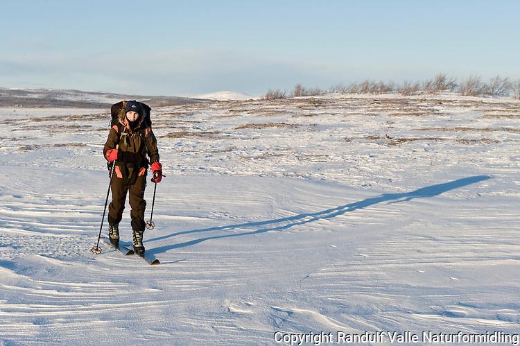 Dame med stor ryggsekk går på ski på Finnmarksvidda. ---- Woman skiing.