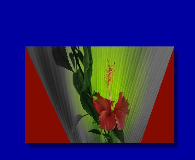 Flora, flower Asia, hibiscus 7366b