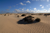 Sand dunes with scrub bushes against background of mountains, Corralejo,Fuerteventura, Canary Islands,Spain.