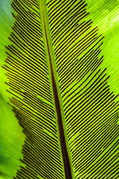 Close-up of plant leaf