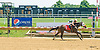 Heaven's Buzz winning at Delaware Park on 7/31/17