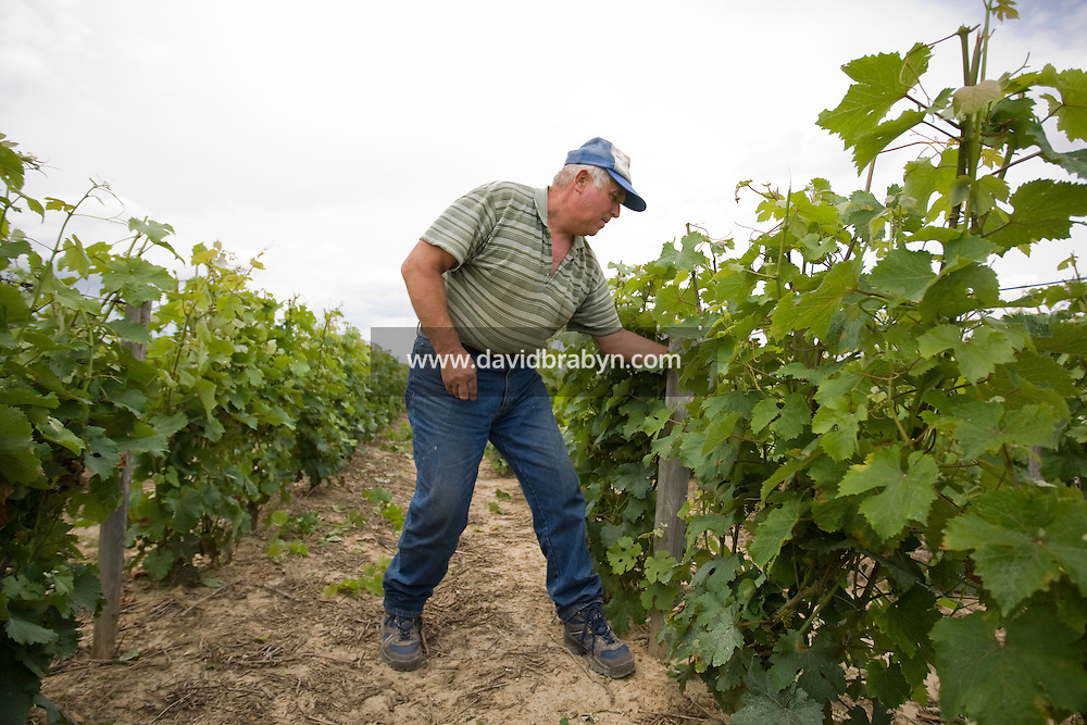 Joel Mazereau works in vineyards outside Vouvray, France, 26 June 2008.