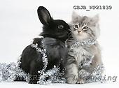 Kim, CHRISTMAS ANIMALS, photos, GBJBWP21839,#XA# stickers