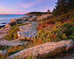 Acadia National Park, ME<br /> Morning light on granite boulders and berry bushes on the Otter Cliffs near Newport Bay