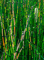 "Horsetails grown in a wet area in Midewin National Tallgrass Prairie.  Horsetails - Equisetum is the only living genus in Equisetaceae, a family of vascular plants that reproduce by spores rather than seeds. Equisetum is a ""living fossil"" as it is the only living genus of the entire class Equisetopsida"