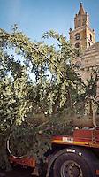 L'abete di Natale arriva in piazza Martiri di Teramo, trasportato da un autoaricolato, per l'addobbo natalizio. L'albero è alto 20 metri e pesa 250 quintali, Teramo 06/12/2013. Nella foto l'arrivo dell'abete davanti al Duomo di Teramo. Foto Adamo Di Loreto / BuenaVista*photo