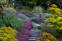 Stepping stone path through drought tolerant summer-dry Northwest hillside garden with yellow Yew, rosemary, lavenders, heather (Erica cinerea 'Purple Beauty') and glazed ceramic cat as focal point; Albers Vista Gardens, Bremerton Washington